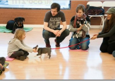 Puppy Classes _ Dog Training Now