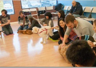 Dog Training _ Dog Training Now