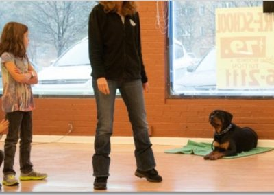 Stay Command _ Dog Training Now