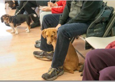 Sit _ Dog Training Now