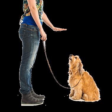 Dog Training Now- Dog Training Programs-Dog Training