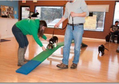 Puppy Preschool _ Dog Training Now