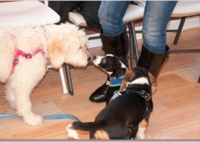 Introducing Your Puppy to Other Dogs _ Dog Training Now