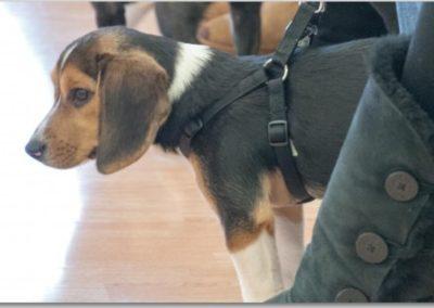 Puppy Training _ Dog Training Now