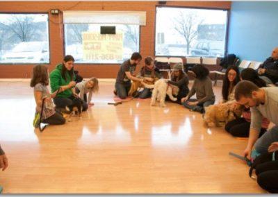 Puppy School _ Dog Training Now