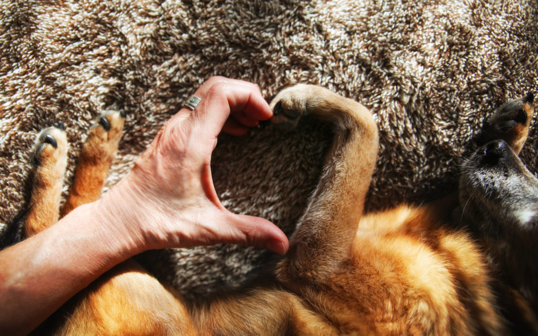How Training Can Make You Love Your Dog Even More