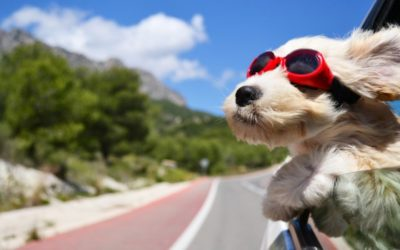 Benefits of Traveling with Your Puppy