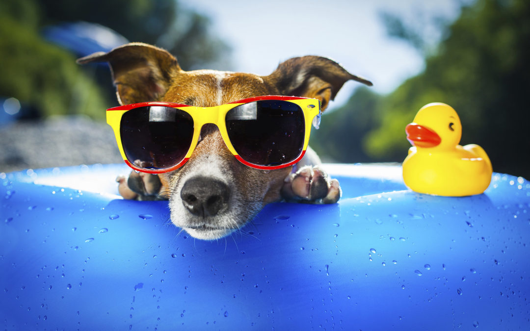 Cold Treats for Your Summer Dog