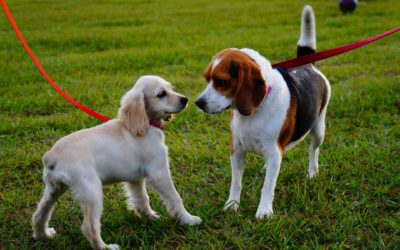 Keeping Your Dog Safe at the Dog Park