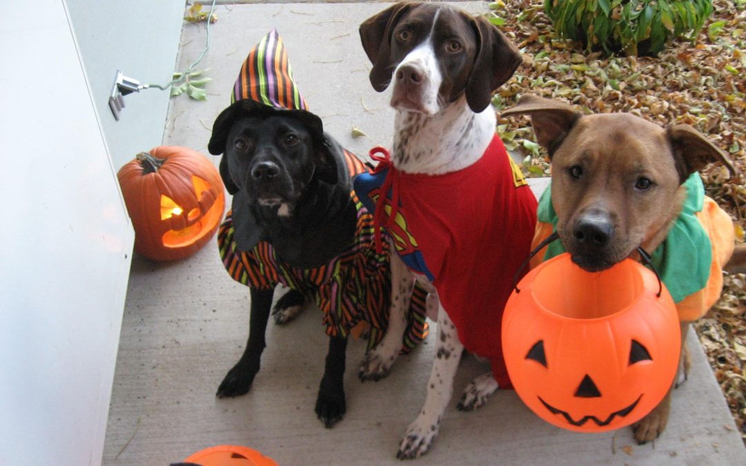 Is Your Dog Ready for Trick or Treaters?
