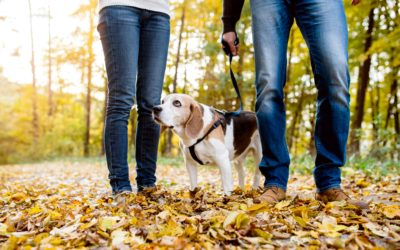 Check Out the Fall Colors With Your Dog
