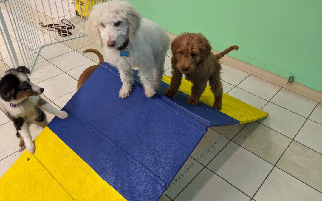 Puppy Socialization During A Pandemic