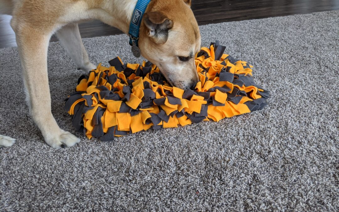 Enrichment Ideas for your pups while stuck inside!